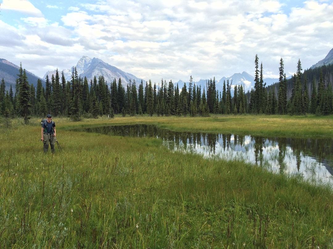 Moose River meadow
