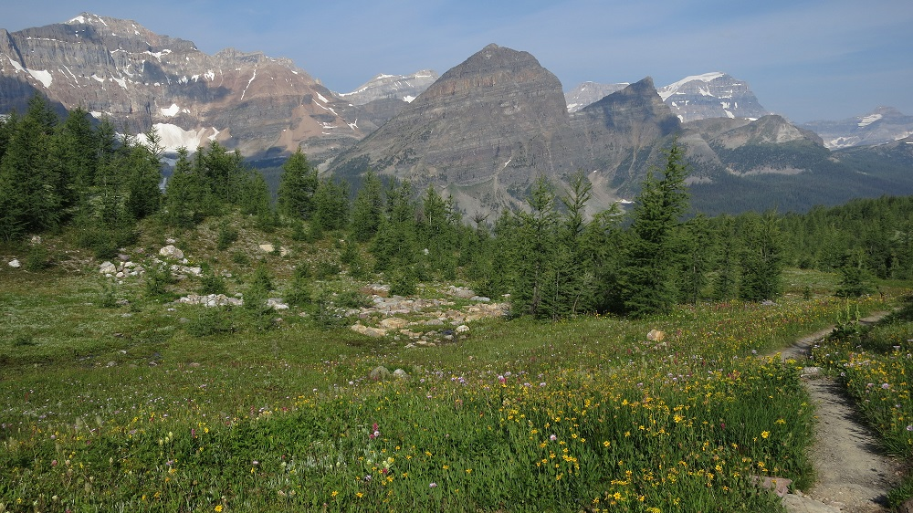 Wildflowers in Banff NP