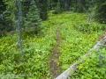 Amiskwi Pass Trail