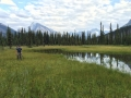 Moose River meadow
