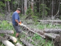 Clearing windfall