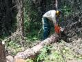 Falling trees for bridge building 2014