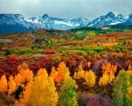 GDT Autumn