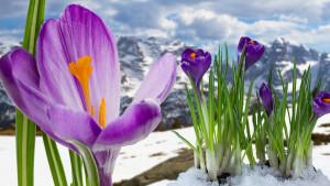 mountains-springtime