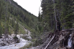Blazing the trail in the Owen Creek Canyon