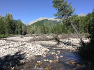 Lower Aldridge Creek