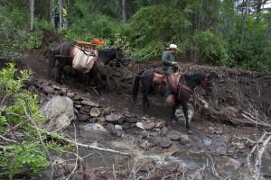 New trail at Mud Creek