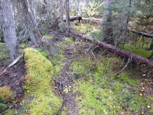 Deteriorating trail