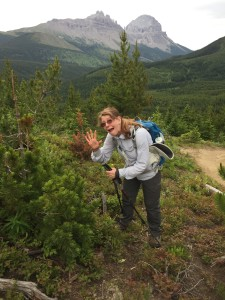 GDTA volunteer Margaret Dumigan points out that this conifer has needles in groups of five and this is thus a protected whitebark pine.