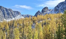 Subalpine larch in theCascade Mountains, Cathedral Lakes Provincial Park, BC