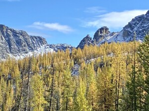 Subalpine larch in the Cascade Mountains, Cathedral Lakes Provincial Park, BC
