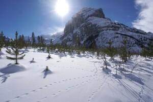 identifying_tracks_snow_1