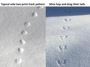 identifying_tracks_snow_10