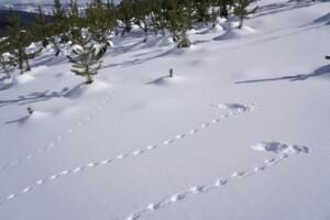 identifying_tracks_snow_3