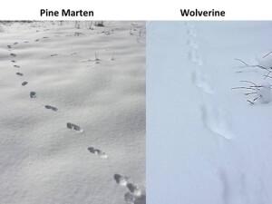 identifying_tracks_snow_5