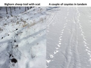 identifying_tracks_snow_7