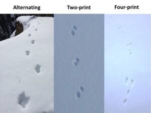 identifying_tracks_snow_8