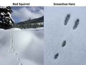 identifying_tracks_snow_9